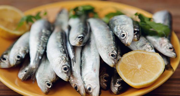 benefícios da sardinha