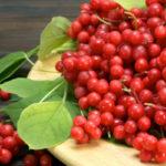 7 Benefícios da Schizandra - Para Que Serve e Propriedades