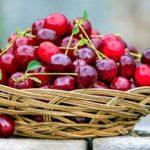 Como Plantar Cereja em Casa - Passo a Passo e Cuidados