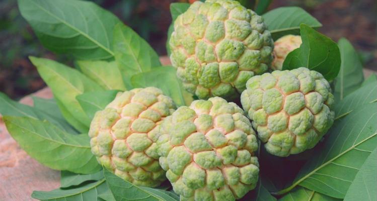 Fruta condessa