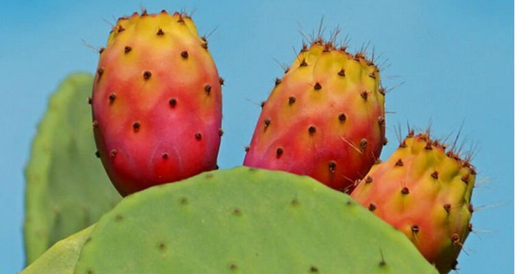 Fruta de palma