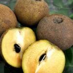 6 Benefícios da Fruta Sapoti - Para Que Serve e Propriedades