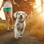 Ter um Cachorro é Ótimo para Saúde e Longevidade, Afirmam Estudos