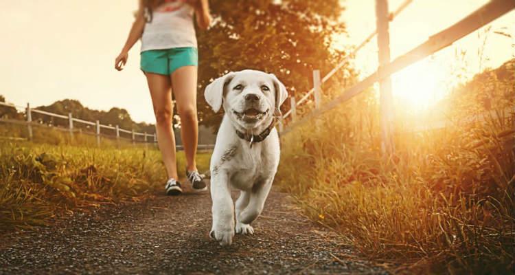 Andando com cachorro