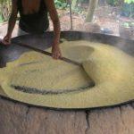 Como Fazer Farinha de Mandioca – 3 Formas e Dicas Especiais