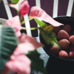 Como Plantar Lichia em Casa - Passo a Passo e Cuidados