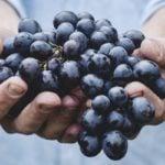 Resveratrol emagrece? O que é e para que serve