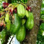 4 Benefícios da Fruta Biri-Biri - Para Que Serve e Propriedades