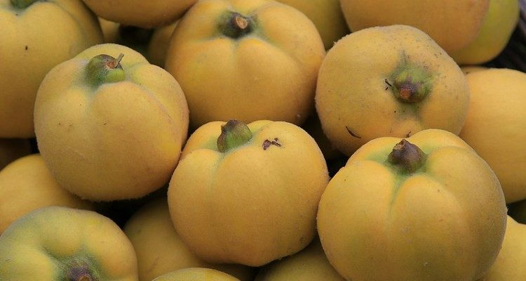 Fruta marmelo