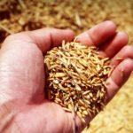 Como fazer farinha de arroz caseira - dicas e receitas!