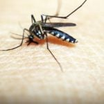 Alergia a picada de inseto - Sintomas e como tratar!