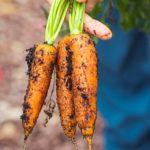 9 raízes comestíveis mais nutritivas