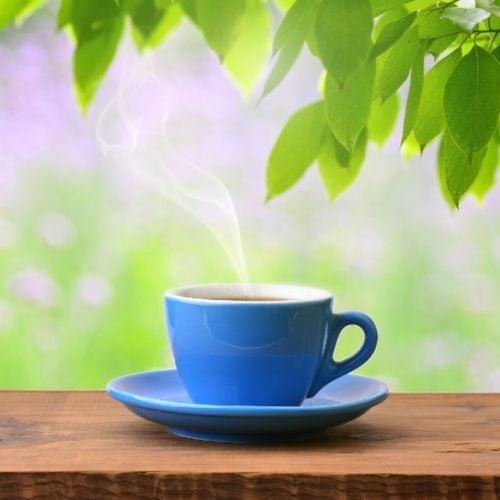 chá de arnica do mato