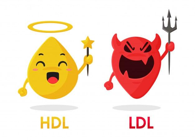 colesterol HDL vs LDL