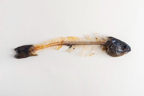 peixe com espinhas