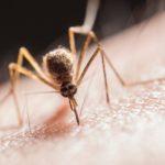 Picada de mosquito