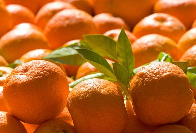 Laranja amarga (bitter orange) ou de Sevilha