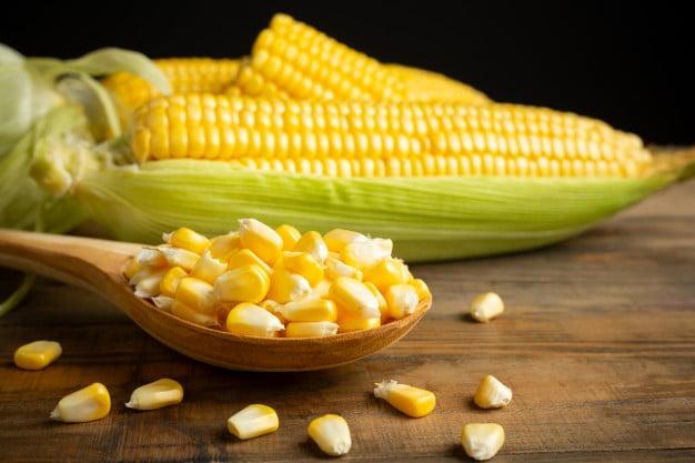 grãos e espigas de milho