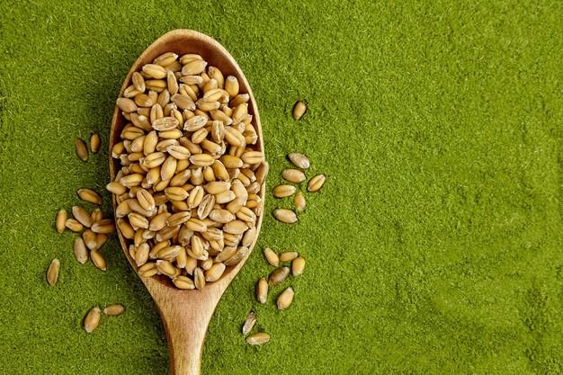 sementes de grama de trigo