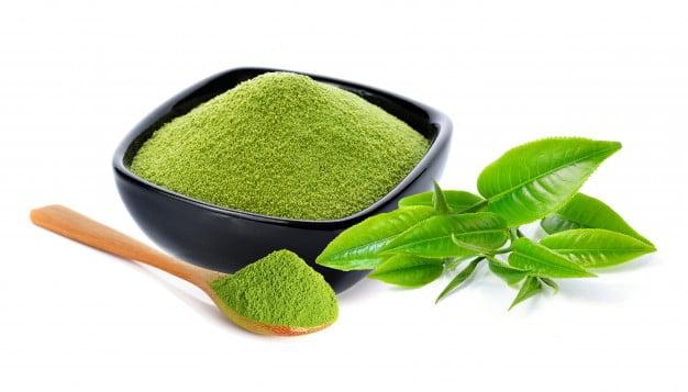chá verde matcha camellia sinensis