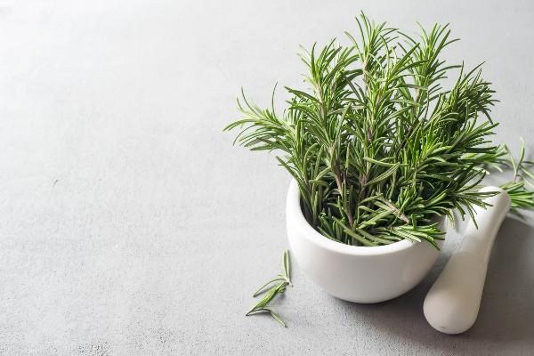 Dicas como plantar alecrim em casa
