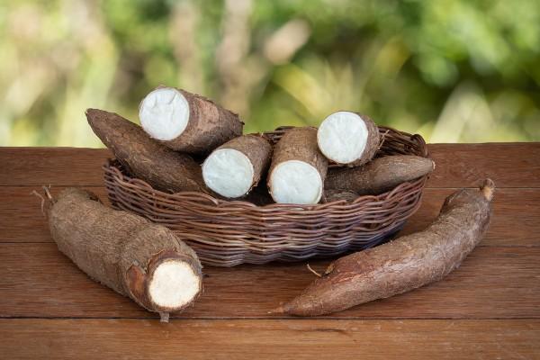Colheita - Como plantar mandioca