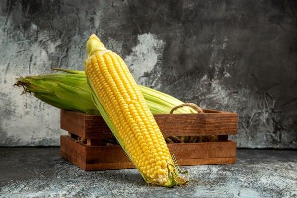 Espigas - Como plantar milho