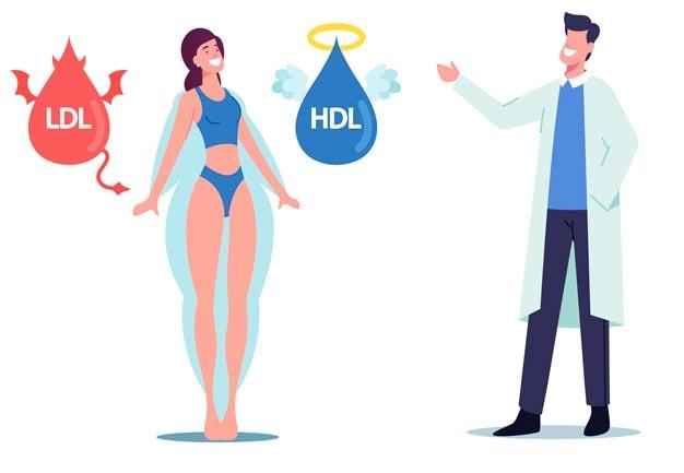 colesterol hdl e ldl