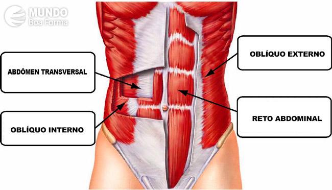 músculos do abdômen