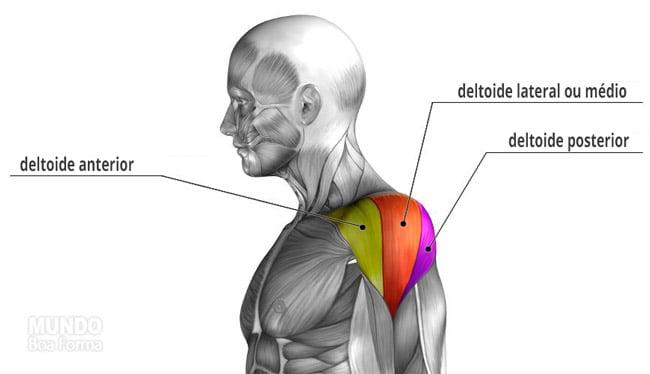 partes do deltoide