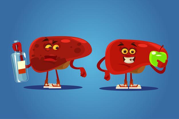 fígado doente vs fígado saudável