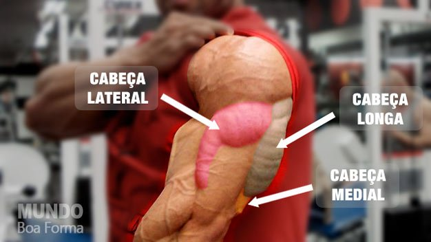 tríceps recortado
