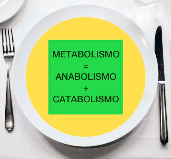 metabolismo anabolismo catabolismo