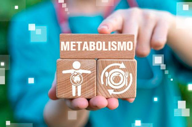 metabolismo pedaços de madeira encaixados